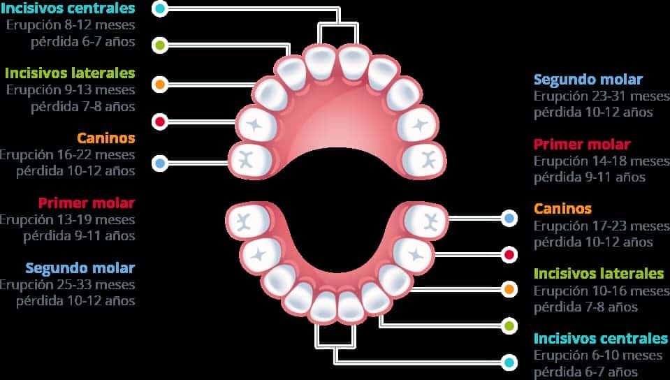 dientes niños