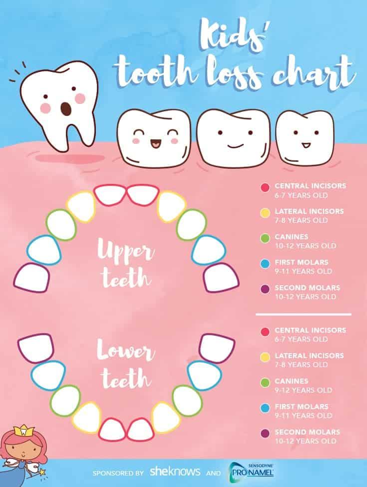caida de dientes infografia
