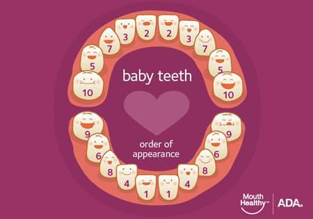dientes de bebes (1)